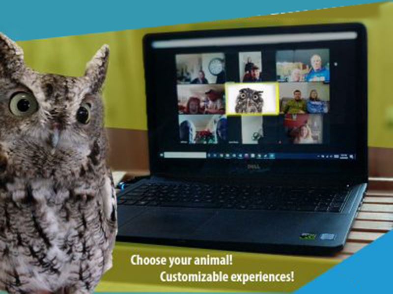 Owl in videochat