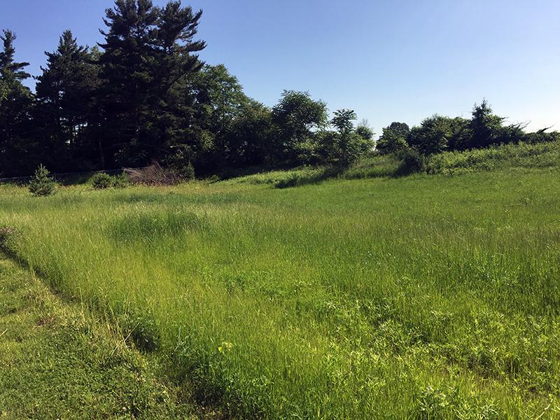 Praire Restoration on hillside for Allendale Christian