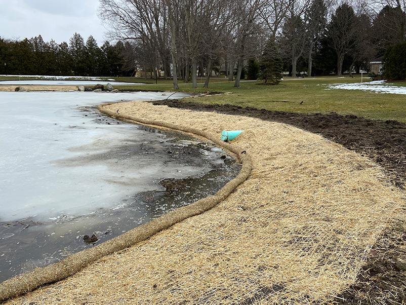 Restored Pond Edge in Winter