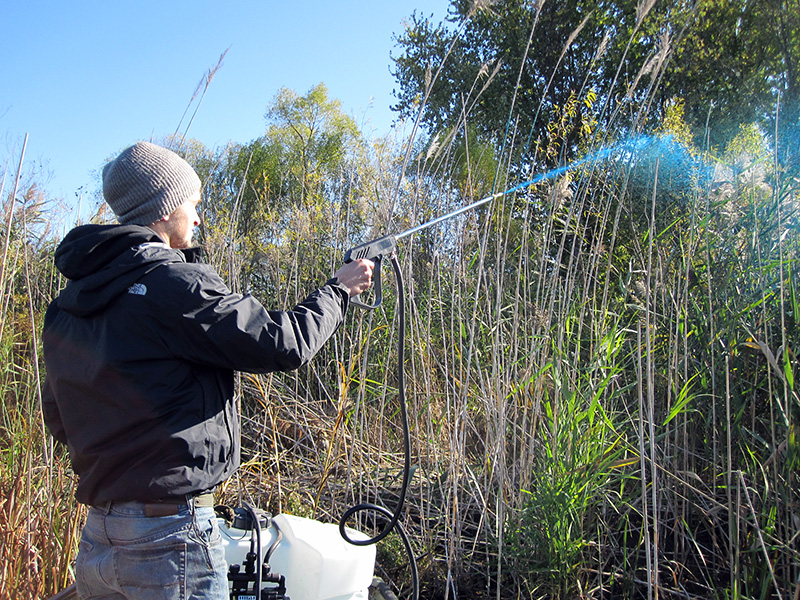 Spraying for invasive species
