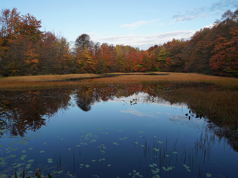 ODC Pond and Woods in Fall Colors