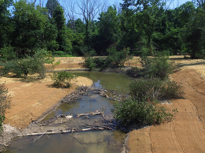 Stabilized Stream Bank with with matting and straw to protect new vegetation from erosion