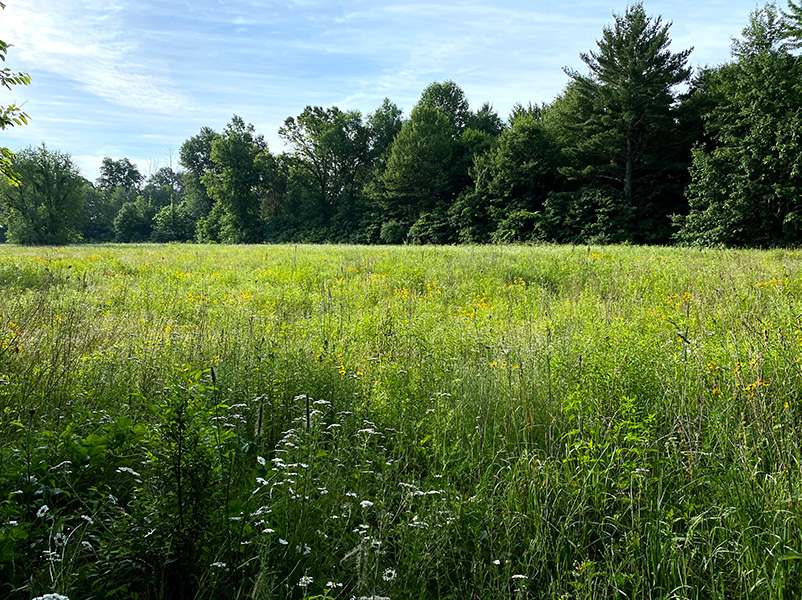 Meadow at Rabbit River Preserve