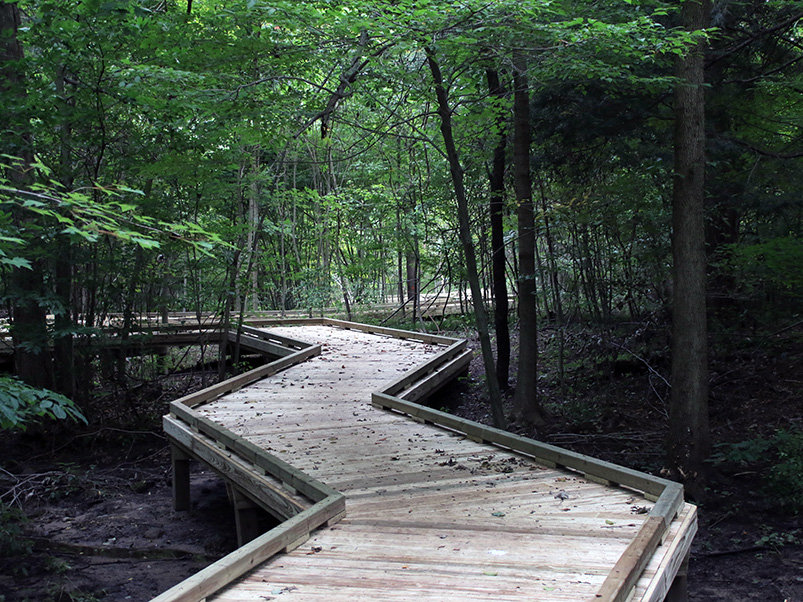 Elevated boardwalk through the woods at Rabbit River Preserve