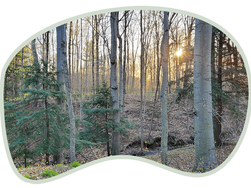 Sun setting in the woods