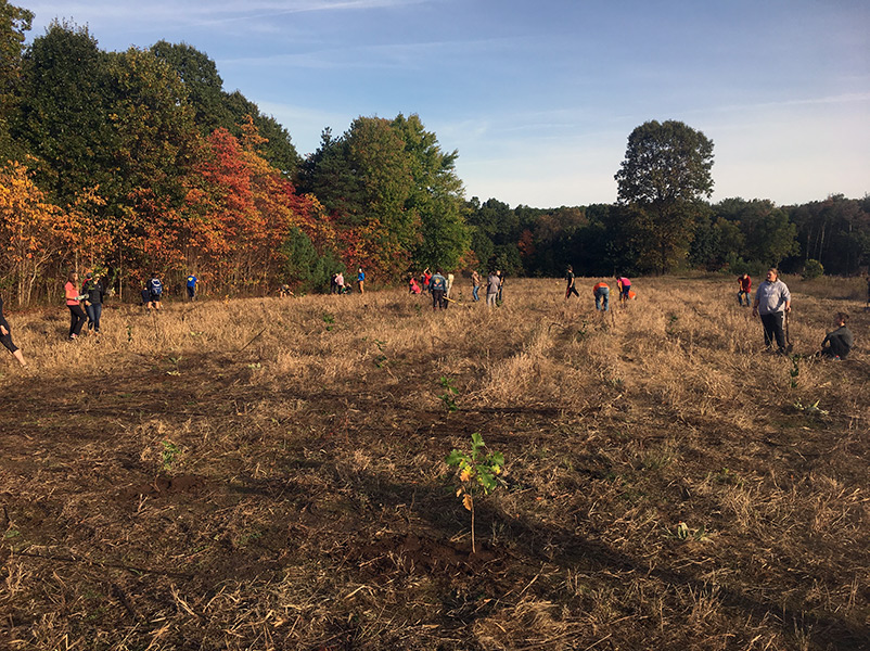 Volunteers planting trees in an open field