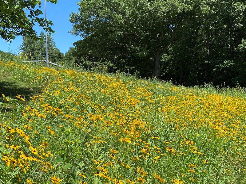 completed hillside meadow restoration for Hamilton Community Schools