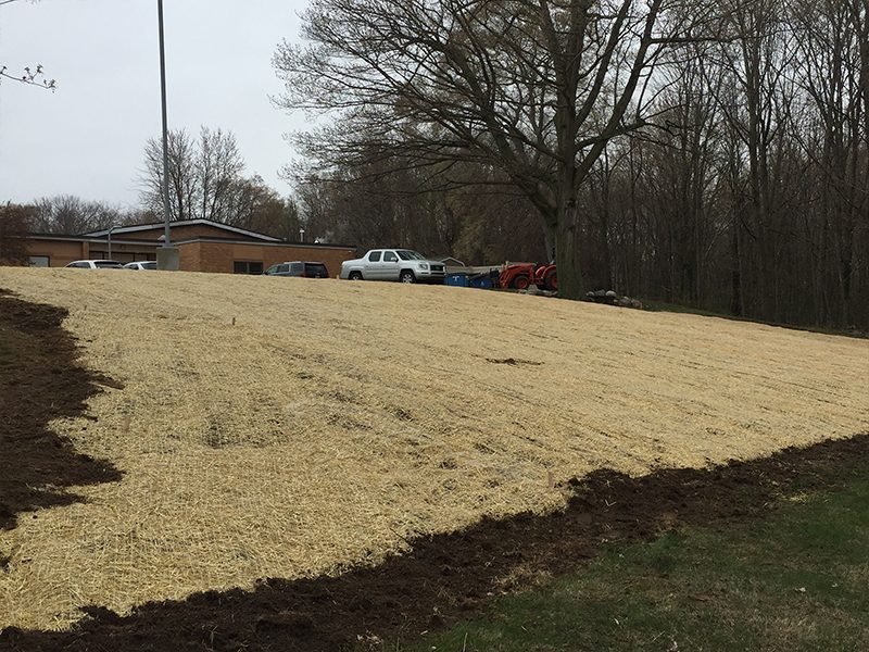 meadow restoration in progress